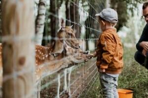 Ein Junge füttert Rehe durch einen Zaun. Hinter dem Jungen kniet ein Mann.