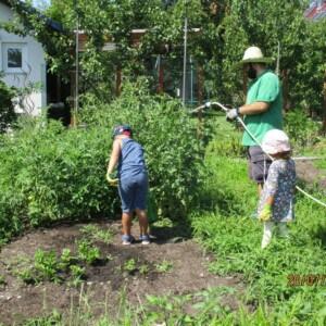 Ein Mann gießt eine große Pflanze in einem Beet. Zwei Kinder stehen daneben.
