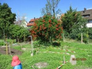 Ein Garten, indessen Mitte ein grüner Busch mit roten Blüten wächst. Im Vordergrnd steht ein Kind mit einer roten Mütze. In dem Garten sind rote Absperrbänder gespannt.