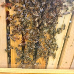 Eine Holzwand mit vielen Bienen.
