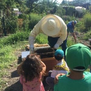 Ein Imker holt eine Wabe aus einem Bienenhaus. Vor dem Bienenhaus sind drei Kinder, die ihm zusehen.