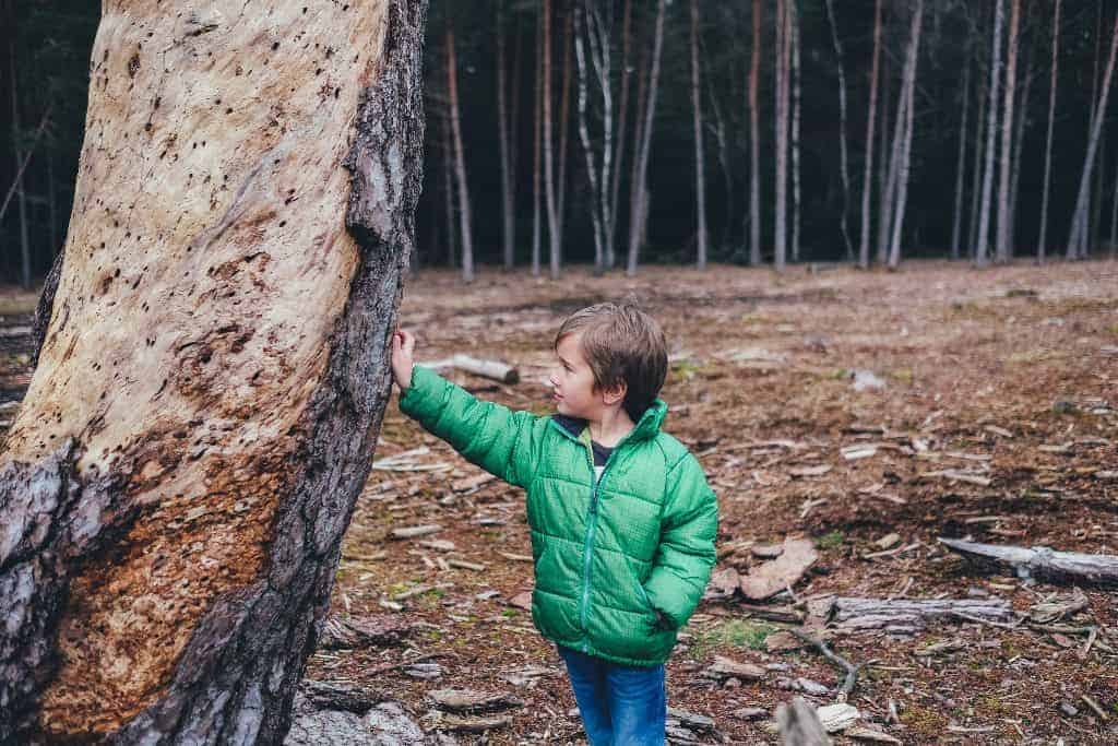 Ein Junge mit einer grünen Jacke hält seine Hand an einen Baumstamm. Im Hintergrund sind viele weitere Bäume zu sehen.